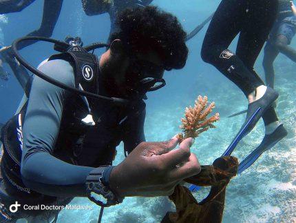Coral Doctors Maafushi Workshop