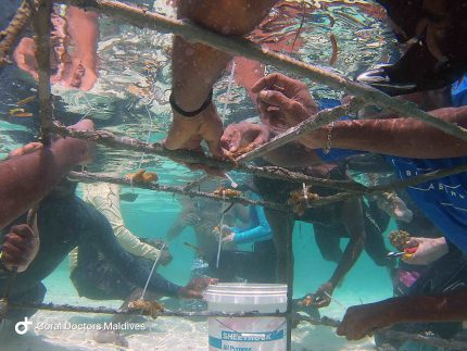 Coral Doctors in Action