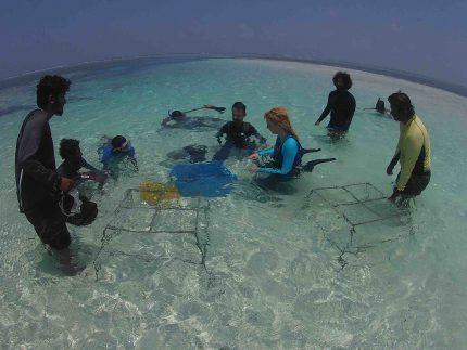 Coral Doctors Workshop
